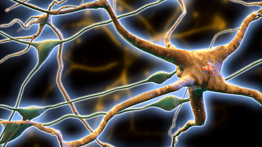 Neurons as Networks