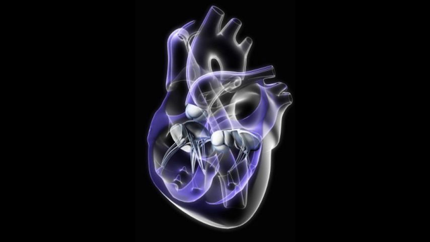 FactPack: Heart