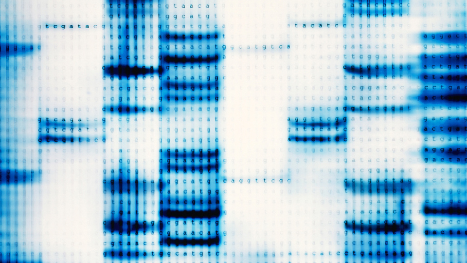 FactPack: DNA