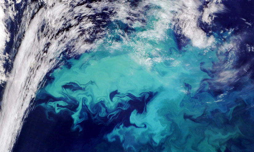 Carbon Capture: Phytoplankton