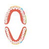 The Function of Teeth (unlabelled)
