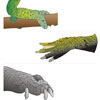 Reptile Adaptations (unlabelled)