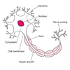 Motor Neuron (labelled)