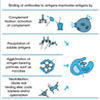 Antigens and Antibodies (unlabelled)