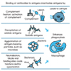 Antigens and Antibodies