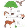Food Web (labelled)