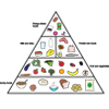 The Five Major Food Groups (labelled)