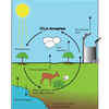 The Carbon Cycle (labelled)