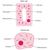 Plant and Animal Cell (labeled)