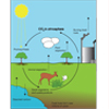 The Carbon Cycle (labeled)