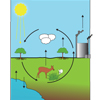 The Carbon Cycle (unlabeled)